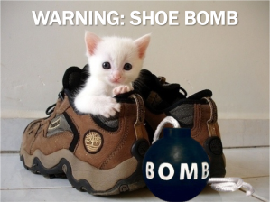 Current-Event-Cat-Shoe-Bomb